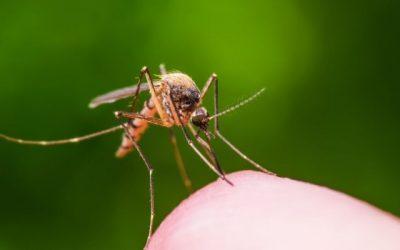 Cómo evitar y aliviar las picaduras de mosquitos