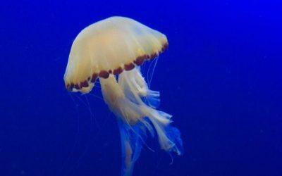 Qué hacer ante una picadura de medusa