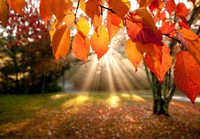 Con el otoño podemos notar decaimiento físico